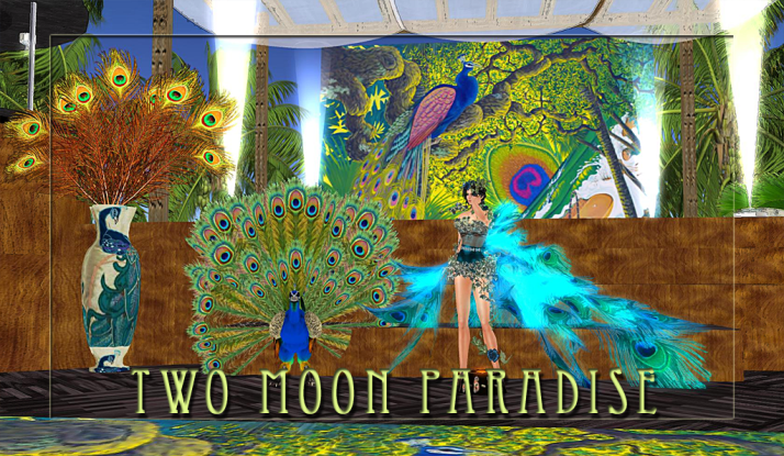 Two Noon Paradise Peacock Fever!