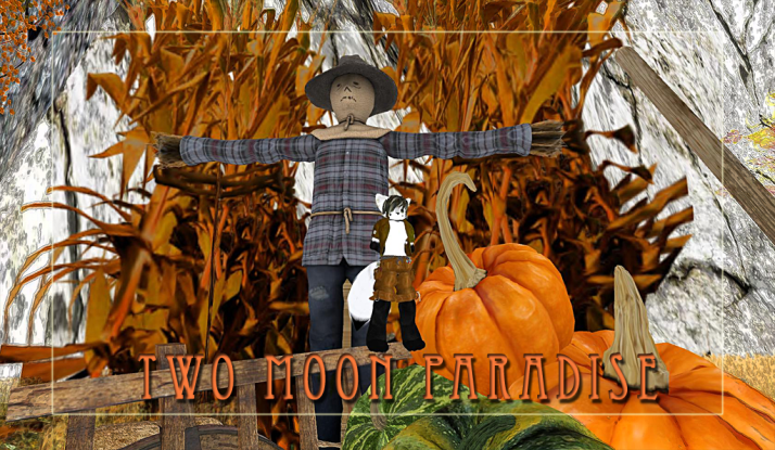 Come visit the Fall Fantasy Forest and Pumpkin Patch at Two Moon Paradise